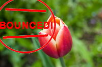 orange pink tulip reject