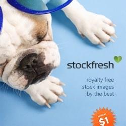 stockfresh banner