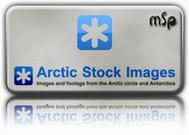 arctic stock logo